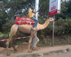 Another Camel...should it be on the footpath?