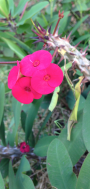 Nairobi-Flowers-Rantatonne00002