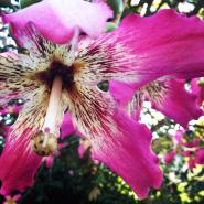 Nairobi-Flowers-Rantatonne00013