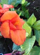 Nairobi-Flowers-Rantatonne00014