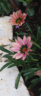 Nairobi-Flowers-Rantatonne00041