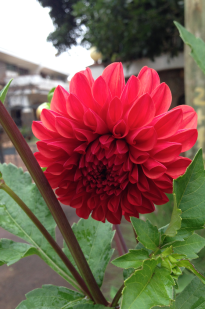Nairobi-Flowers-Rantatonne00047
