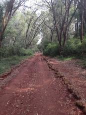 Hike through Arboretum