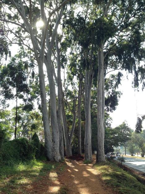 nairobi-waiyakiway-trees-rantatonne
