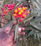 More flora and bio-diversity