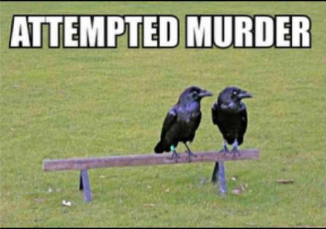 attempted-murder-rantatonne