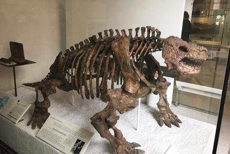 nat-history-museum-turtles-rantatonne1