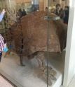 nat-history-museum-turtles-rantatonne2